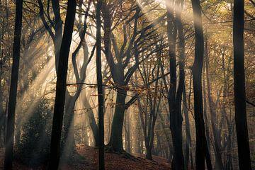 Tree of Light van Edwin Mooijaart