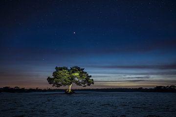 De verlichte boom van Bart Verbrugge