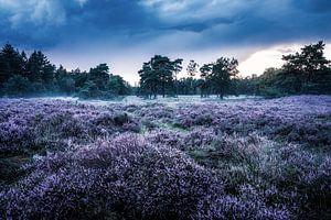 Heideveld in Den Treek-Henschoten van