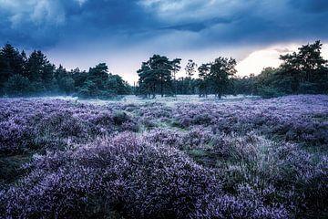 Heideveld im Gut Den Treek-Henschoten von Dannis van der Heiden