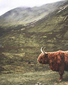 Schotse Hooglander in de Schotse Hooglanden