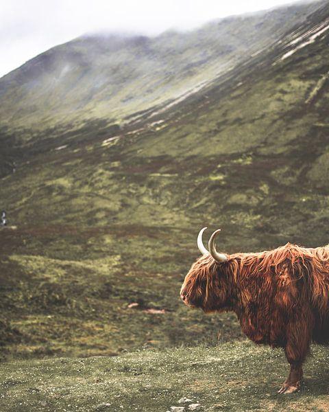Schotse Hooglander in de Schotse Hooglanden van Arun Shanmugampillai