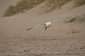 landing von Max van Boxel