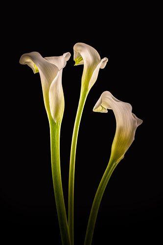 Callas 3 in kleur