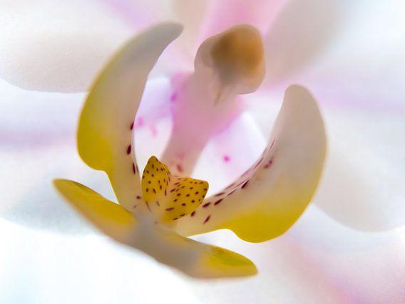 Orchidee  / Bloem / Blad / Natuur / Licht  / Roze / Paars / Geel / Wit / Close-Up Macro van Art By Dominic