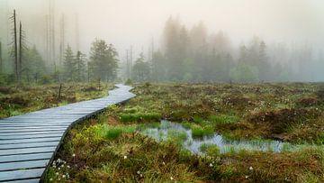 Torfhaus heide in de mist van Steffen Henze