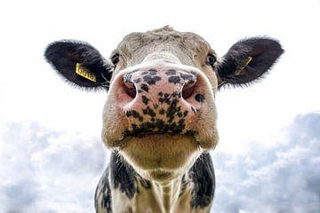 Kuh schaut fröhlich in die Kamera