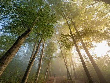 Mistige zonsopkomst bos bij Zeist! van Peter Haastrecht, van