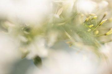 Fleur sur Ron Kleinjans