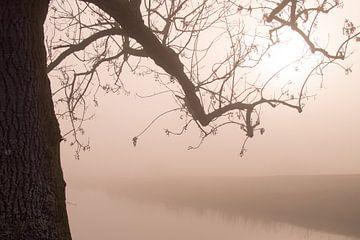 Baumast im Nebel von Bert-Jan de Wagenaar