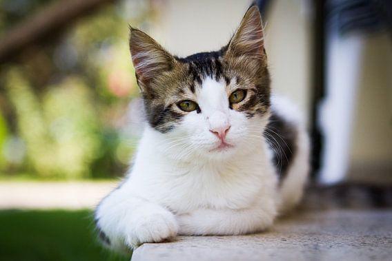 Cat at ease van Leon Weggelaar
