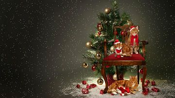 Kerst met katten van Jeannette Penris