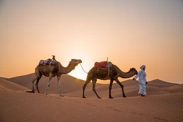 Kamelen Marokko Sahara van Jarno Dorst