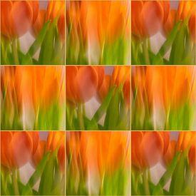 Tulpen | B van Rob van der Pijll