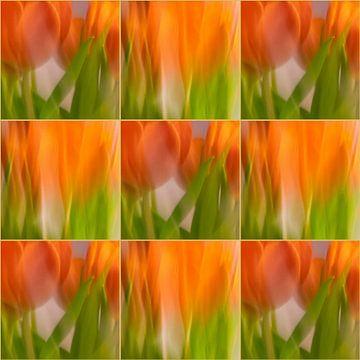 Tulpen | B von Rob van der Pijll