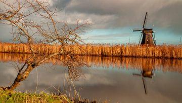Baum mit Windrad von Paul Vergeer