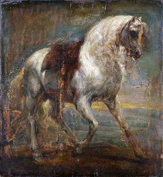 Ein Pferd, Schimmel, Anthony van Dyck, 1641 von Atelier Liesjes