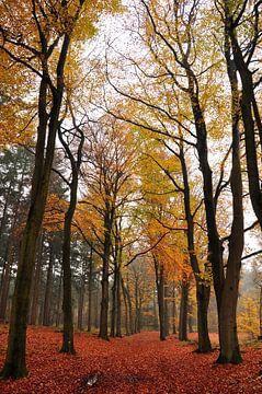 Herfst in de Achterhoek von Arno Wolsink