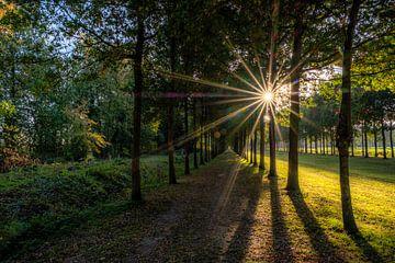 Herbstlicht im Wald von Moetwil en van Dijk - Fotografie