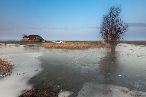 Winter bij Harssensbosch