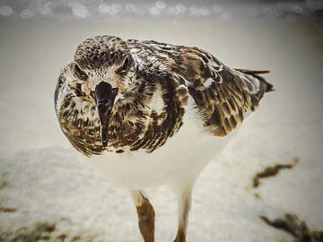 Vogel van Kimberly Galjaard