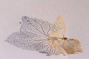 Geraamte van een hortensiablaadje
