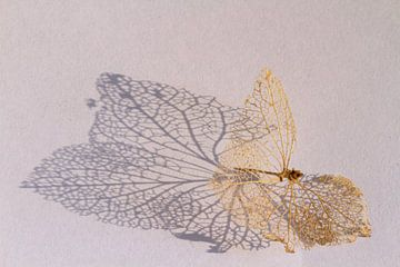 Geraamte van een hortensiablaadje van Dirk Jan Kralt