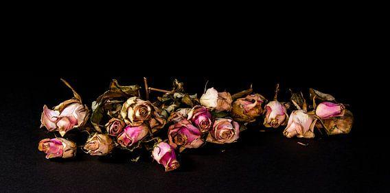 Gedroogde rozen op een rij
