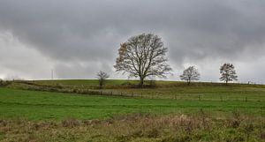 Landschaft mit Bäumen vor einem grauen Wolkenhimmel