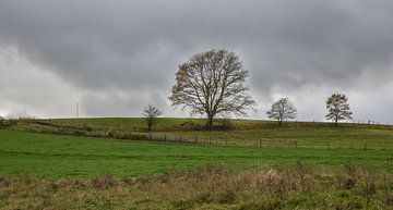 Landschaft mit Bäumen vor einem grauen Wolkenhimmel von Gonnie van Hove