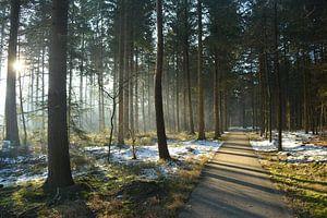 Bos in stilte op winterochtend