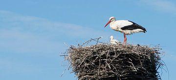 De Ooievaar Op Haar Nest van Ellen Voorn
