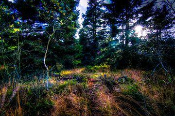 High Fens Woodland sur Colin van der Bel
