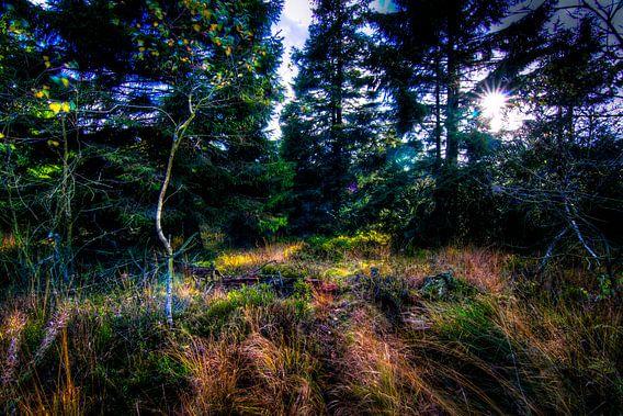 High Fens Woodland