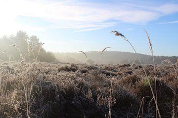 Koude ochtend in Schoorlse duinen van Kevin Ruhe