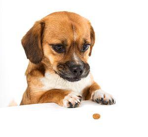 een schattig hondje die een brokje wil pakken van