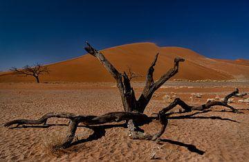 entlang der straße in namibie2 von Ed Dorrestein
