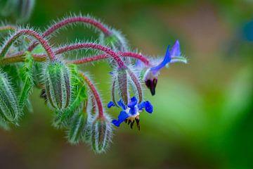 Hangende bloemen von Peter Relyveld