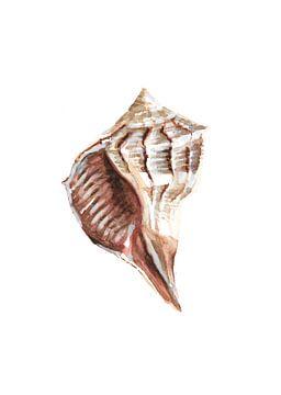 Shell von Olga Tromp