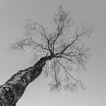 Boomtop von Henri Boer Fotografie