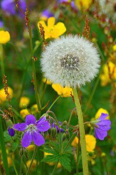 Norwegian Wildflowers van Gisela Scheffbuch