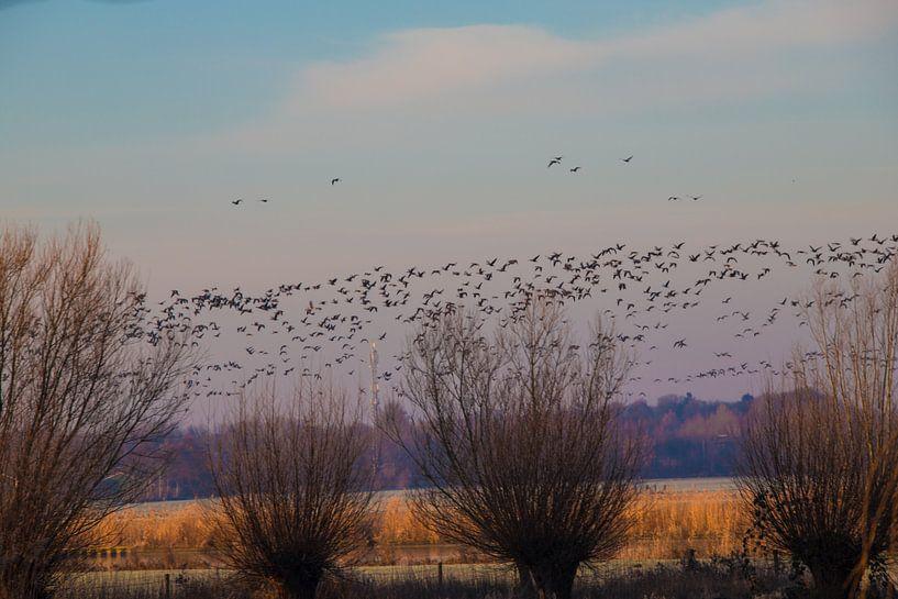 vogeltrek de ochtend van Gertjan Hesselink