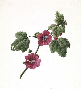 Branch with Purple Flowers van M. de Gijselaar 1830