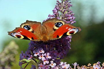 Die Augen des Schmetterlings von Kirsten L.