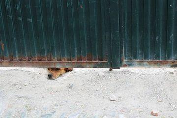 Hond van Tatjana Korneeva