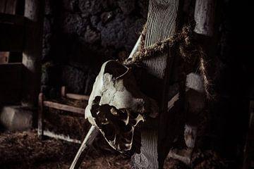 Crâne Sur Corde sur Luuk Holtrop