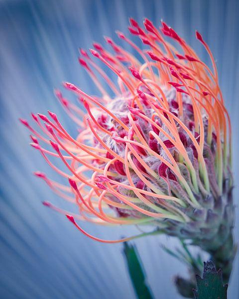 Bunte Blume von Wim van Beelen