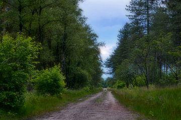 Onverharde weg in het bos van Leo Huijzer