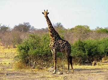 De Giraf komt even bij ons kijken van Merijn Loch