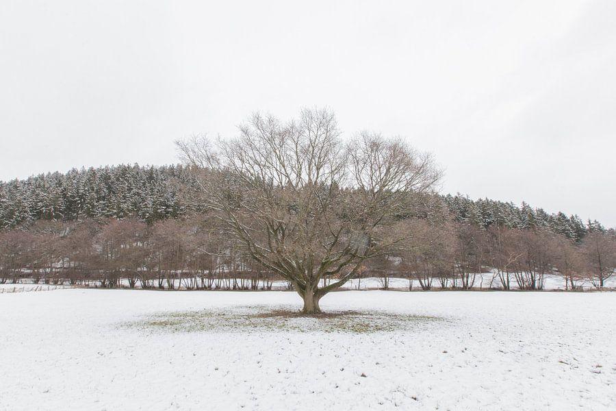 Boom in winterlandschap van Marc Vermeulen